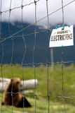 Bear Behind Electric Fence Stock Photography