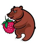 Bear and Berry Royalty Free Stock Image