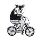 Bear on the bicycle. Vintage Illustration on white background. Stock Photos