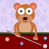 Bear billiards Stock Image