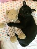 Bear and black cat