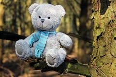Bear on a branch. Teddy bear on a branch with a blue scarf Stock Photos