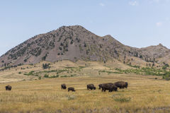 Bear Butte. A scenic mountain like butte with buffalo stock image