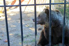 Bear in a cage. In a zoo Stock Photos