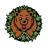 Bear Cannabis Mascot Design Vector stock photos