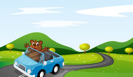 Bear and car Royalty Free Stock Image