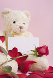 Bear with card Royalty Free Stock Photography