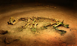 bear cave skeleton spelaeus ursus Στοκ Εικόνες