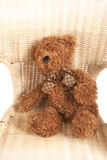 Bear on a chair Stock Images