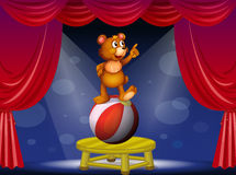 A bear at the circus show Royalty Free Stock Photos
