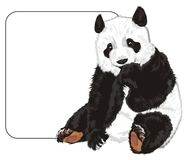 Bear and clean banner. Cute panda sit with big clean white paper Royalty Free Stock Images
