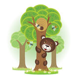 Bear climbs a tree for honey. Bear climbs a tree to steal honey from bees Royalty Free Stock Photo