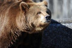 Bear in a croft Stock Photos