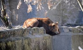 Bear in a croft Royalty Free Stock Image