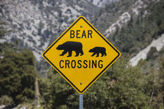 Bear Crossing Highway Sign with National Forest Background Stock Image