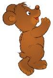 Bear cub Stock Photography