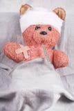 Bear cub Stock Photos