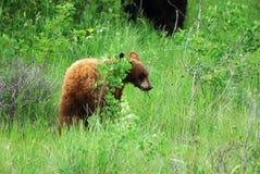 Bear cub stock image
