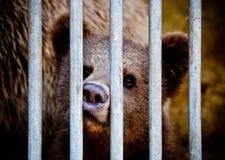 Bear cub behind bars Royalty Free Stock Photos