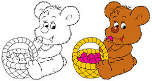 Bear-cub eats the ripe berry Stock Image