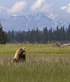 Bear cub and mountains Stock Photography