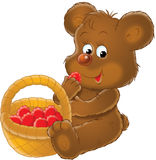 Bear cub and ripe strawberry Royalty Free Stock Photography