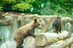 Bear Cub Stock Images