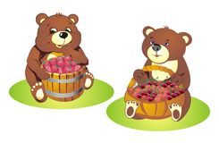 Bear cubs with berries Stock Photography