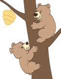 Bear Cubs Trying to get Honey. Hungry bear cubs trying to climbing a tree to get some honey Royalty Free Stock Image