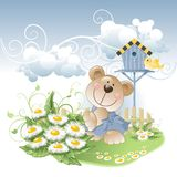 Bear and daisies Royalty Free Stock Photos