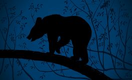 Bear in The Dark Night Forest Stock Photo