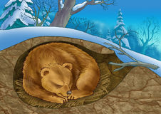 Bear in a den. The bear sleeps in the winter in a den Royalty Free Stock Images