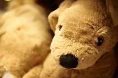 Bear Doll. The brown bear doll presented themselves on the shelf waiting for people play and pay them. The doll hopes one day there would be someone take them Royalty Free Stock Image