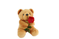 Bear doll holding a rose Stock Photos
