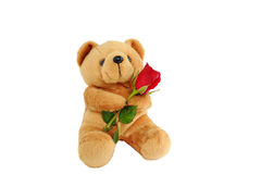 Bear doll holding a rose Royalty Free Stock Photography