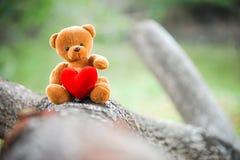 Bear doll Stock Photos