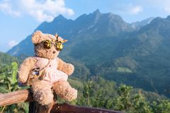 Bear doll sitting and relax in the morning time Royalty Free Stock Photos