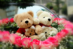 Bear dolls. Rose around the doll bears Stock Image