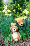 Bear dolls in a garden Stock Images
