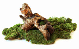 Bear on driftwood, carved in wood sculpture, composition, in a c. Learing; moss, scared, surprised bear falls from driftwood, on which he played Royalty Free Stock Images