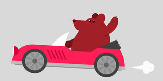 Bear driving a sports car Stock Photos