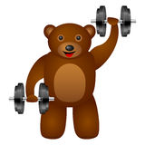 Bear dumbbel Royalty Free Stock Photography