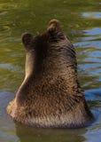 Bear ears Royalty Free Stock Photo