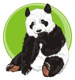 Bear and empty banner. Panda peek up from green circle icon Royalty Free Stock Photography