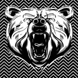 Bear face Royalty Free Stock Images
