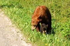 Bear family stock image