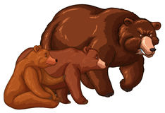 Bear family with little cub. Illustration Stock Image