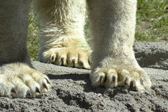 Bear Feet Stock Photo