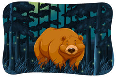 Bear and fireflies. Brown bear and fireflies in the jungle at night Royalty Free Stock Photos