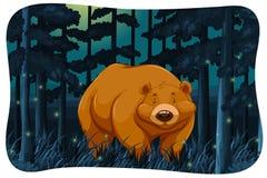 Bear and fireflies Royalty Free Stock Photos